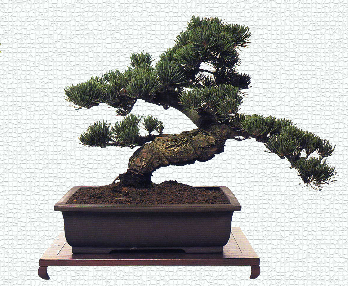 Bonsai Tree For The Office Interior Office Plants