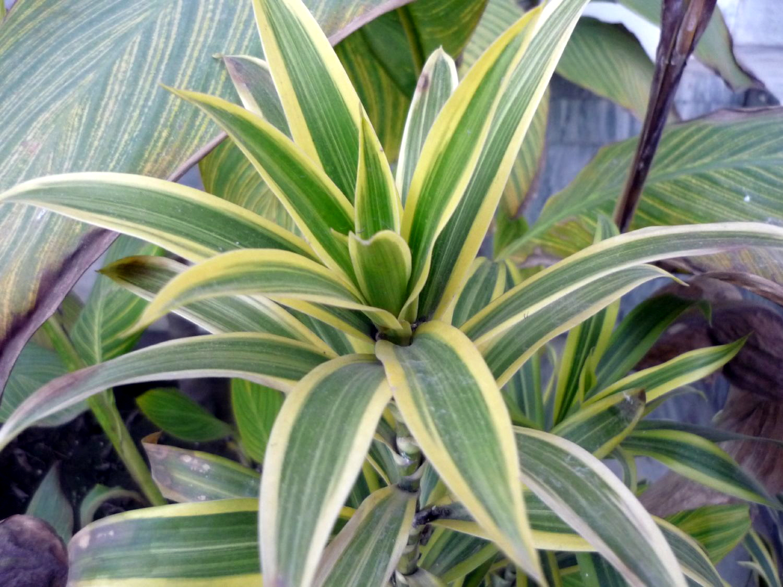 Advantages of Office Plants :: Interior Office Plants