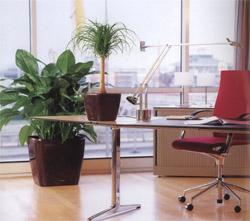 office plants interior office plants part 4