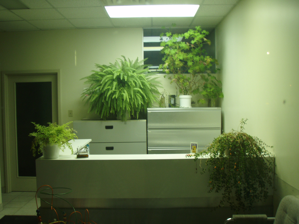 Awesome Office Plants Office Interio Design At Cbs Office Interiors Berkshire
