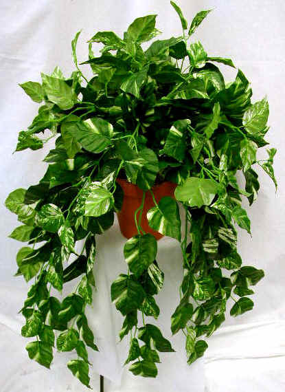 Facts about low light house plants interior office plants for Office plants no natural light