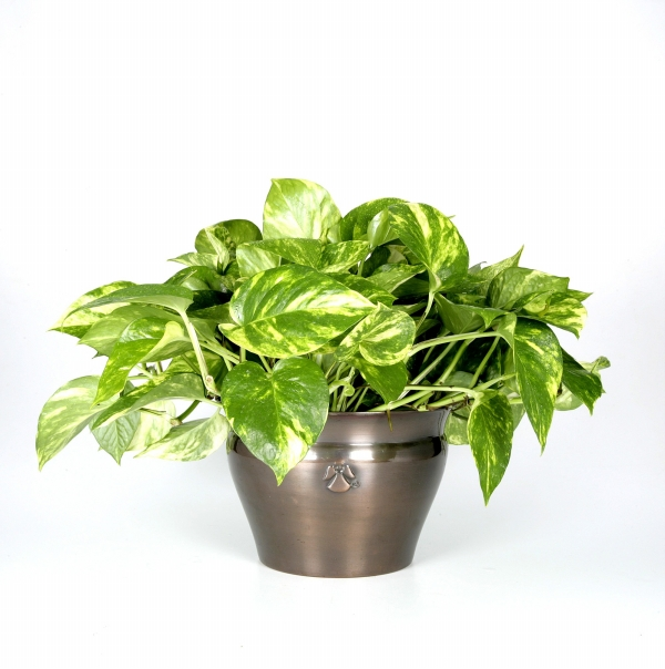House plants pictures and names - House plants names and pictures ...