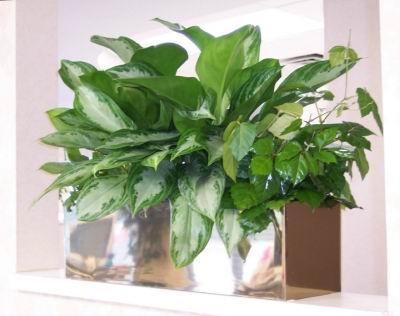 studies - Office Plants